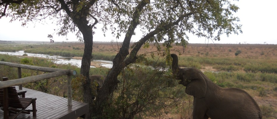 DSCN1534 - Copy - Luxurious Guesthouse Bordering the Kruger Park and overlooking the Crocodile River – Under Offer