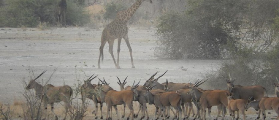 """7 - Copy - Unique Bush Lodge and Camp Site – Northern Botswana – """" The Chobe Enclave """""""