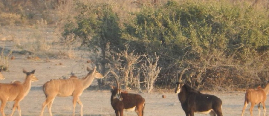 """8 - Copy - Unique Bush Lodge and Camp Site – Northern Botswana – """" The Chobe Enclave """""""