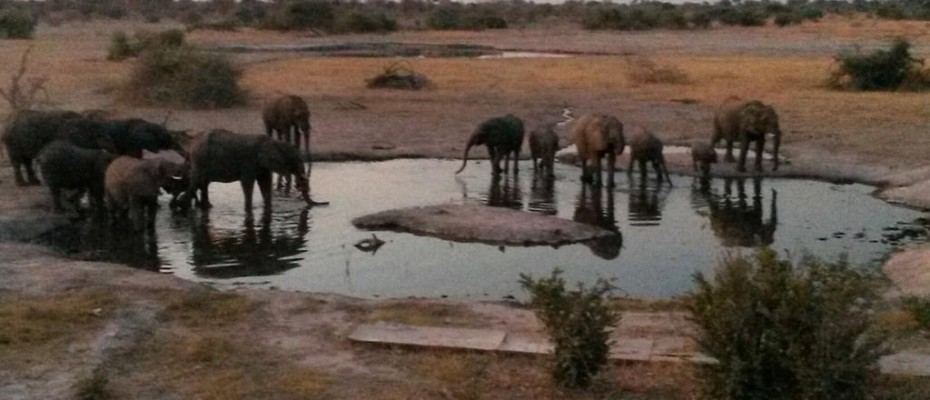 """9 - Copy - Unique Bush Lodge and Camp Site – Northern Botswana – """" The Chobe Enclave """""""