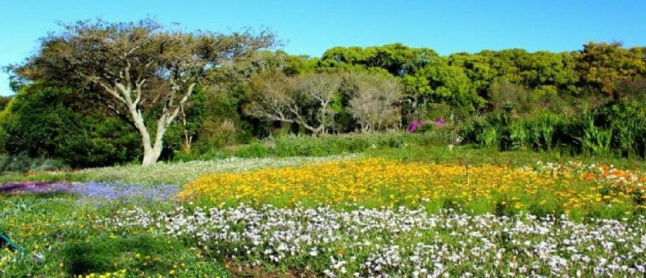 pic1 - 5 Star Guest Villa – Southern Suburbs Cape town