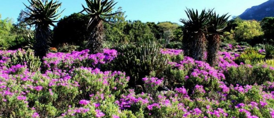 pic2 - 5 Star Guest Villa – Southern Suburbs Cape town