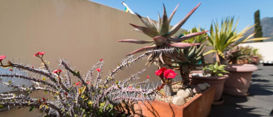 1 (43) - Charming B&B – 4 Guest rooms and Owners Suit – Gardens – Cape Town